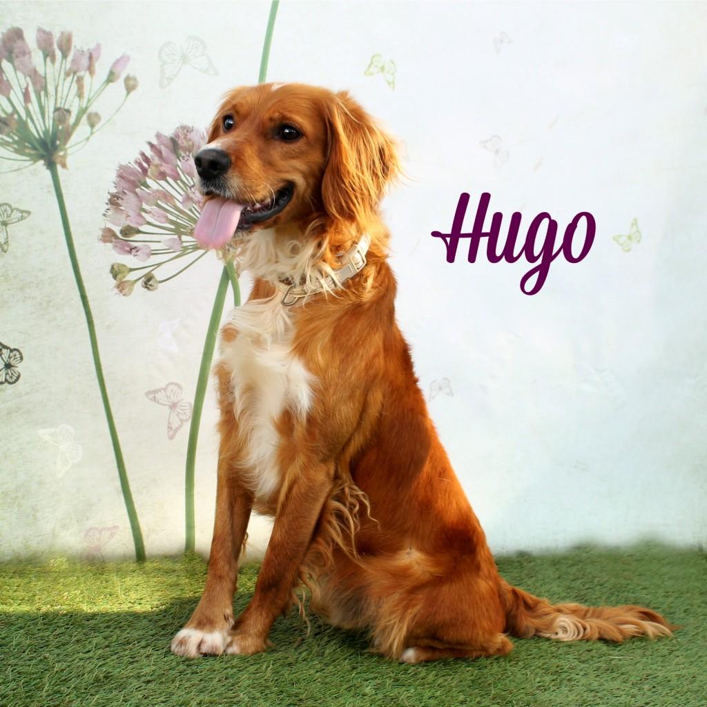 hugo21