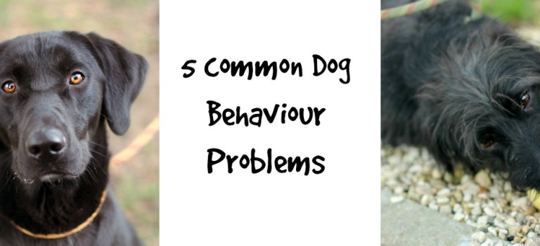 5 common dog behaviour problems