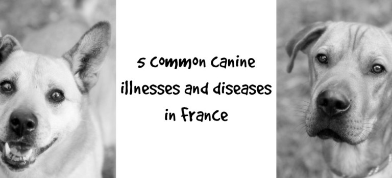 5 common canine illnesses and diseases in France