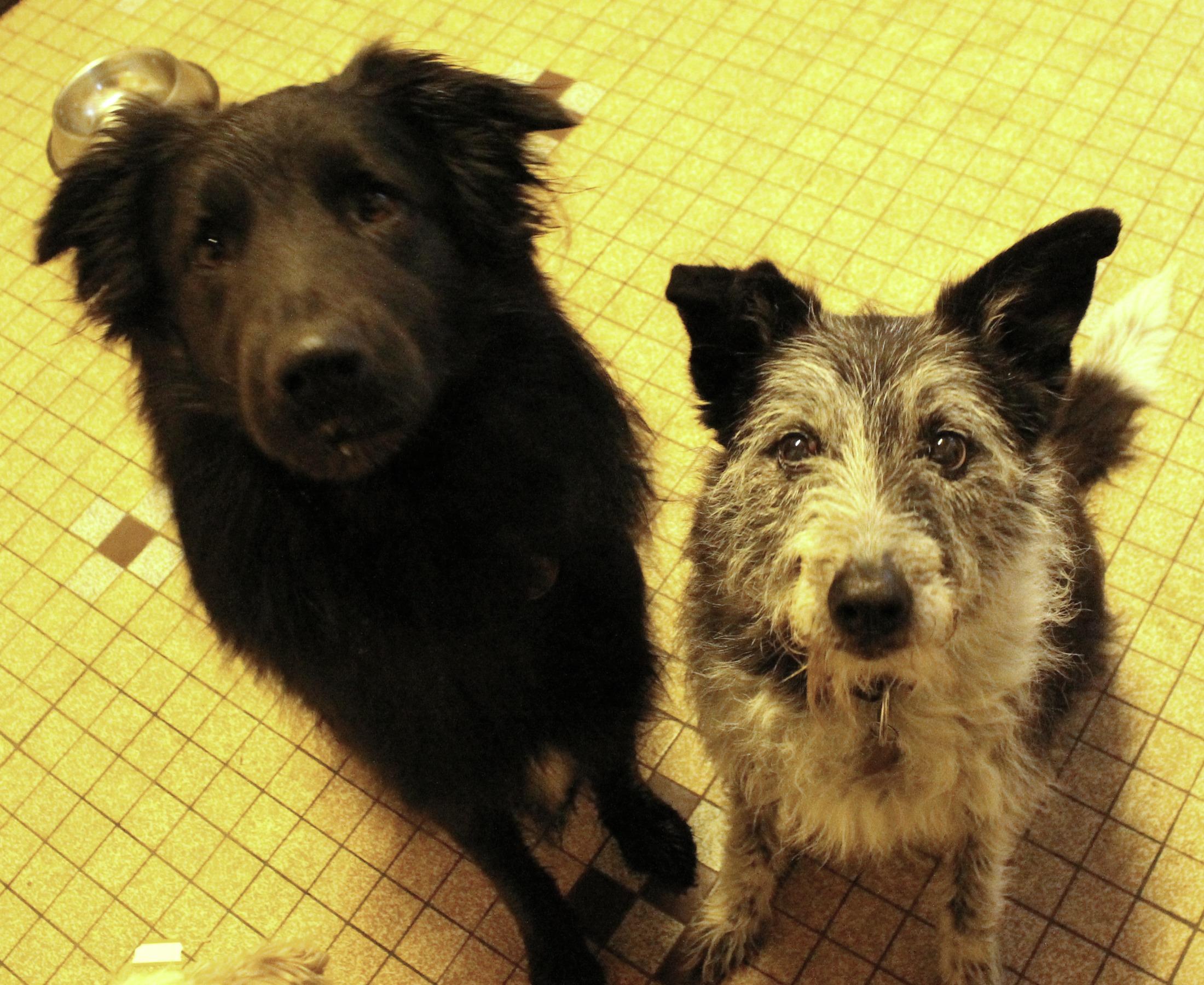 Guidance – Woof Like To Meet
