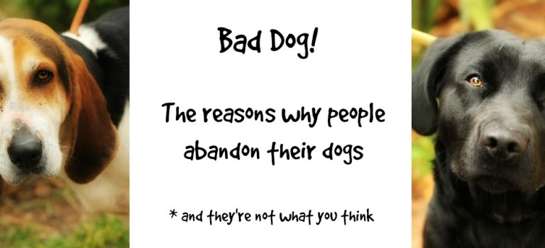 Bad dog! Why people abandon their dogs… and it's not what you think