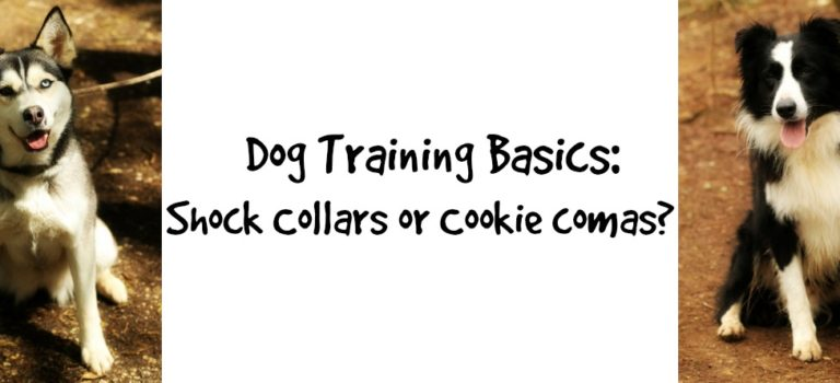 Dog Training Basics: shock collars or cookie comas?