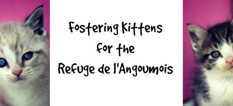 Kitten Fostering