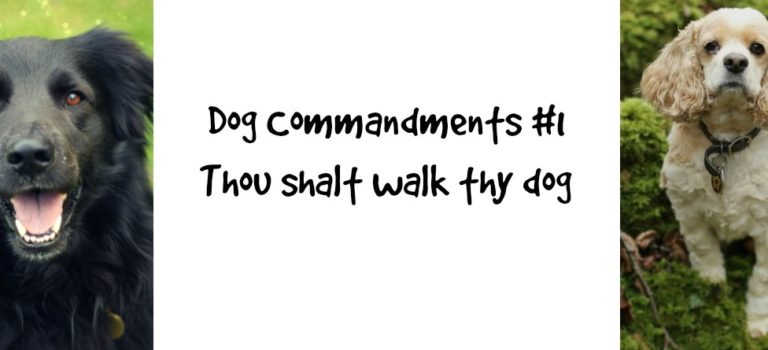 Dog Commandments #1: thou shalt walk thy dog