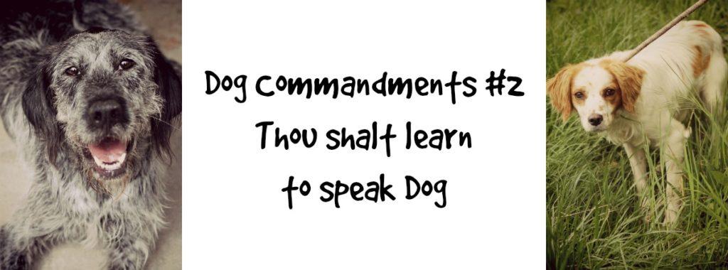 dogcommandments#2