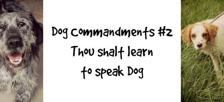 Dog Commandments #2: thou shalt learn to speak dog
