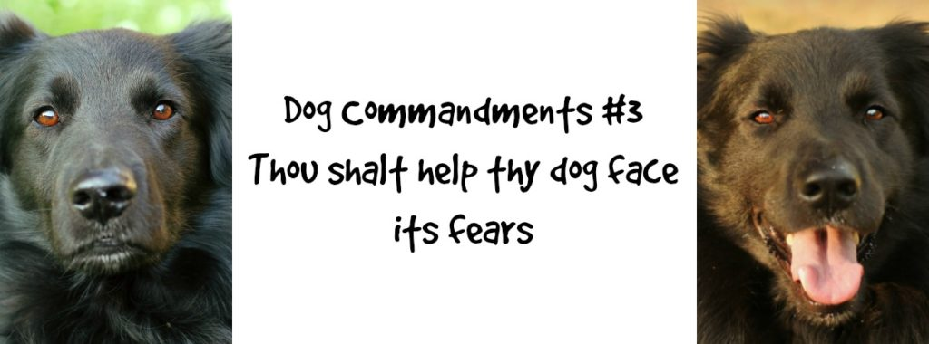 dogcommandments3