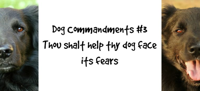 Dog Commandments #3: Thou shalt help thy dog face its fears