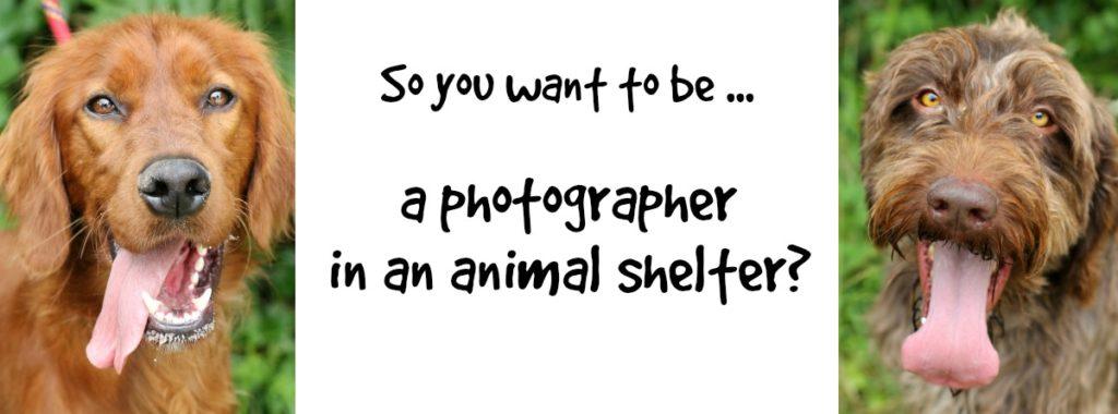 petphotography