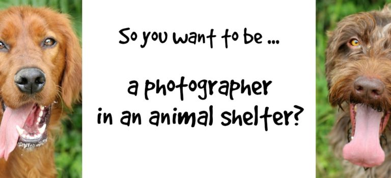 So you want to be a photographer in an animal shelter?