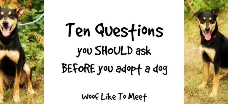 10 questions you SHOULD ask when you adopt a dog