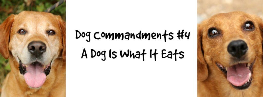 dogcommandments#4