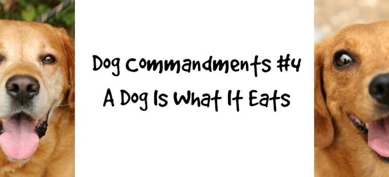 Dog Commandments #4: A dog is what it eats