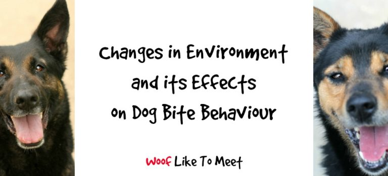 Changes in environment and its effects on dog bite behaviour