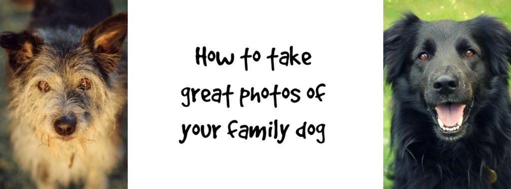 familydogphoto