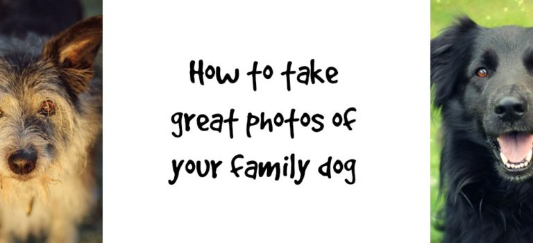 How to take great photos of your family dog
