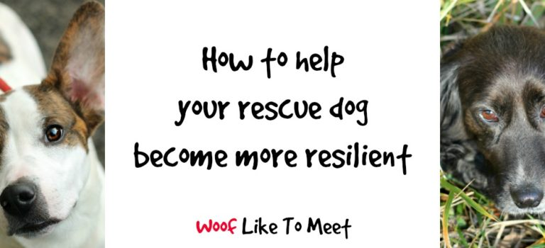 How to help your rescue dog become more resilient