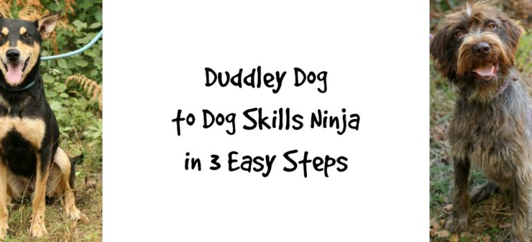Duddley Dog to Dog Skills Ninja in three easy steps