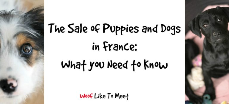 The sale of puppies and dogs in France: what you need to know
