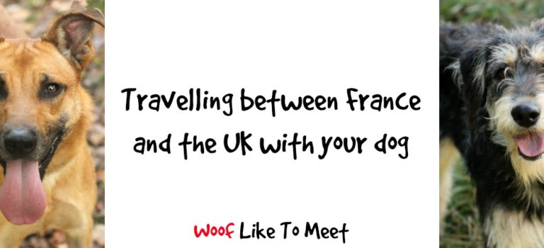 Travelling between France and the UK with your dog