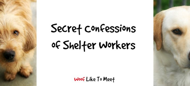 Secret Confessions of Shelter Workers