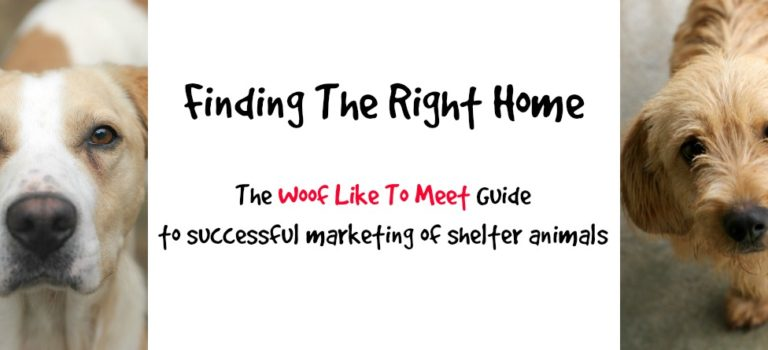 The Woof Like To Meet Guide to Successful Marketing of Shelter Animals