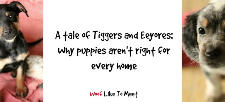 A tale of Tiggers and Eeyores, or why puppies aren't always for every home