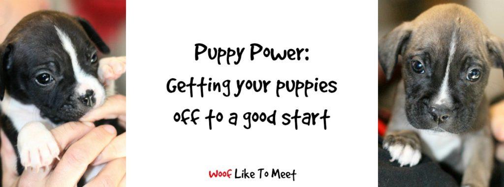puppypower