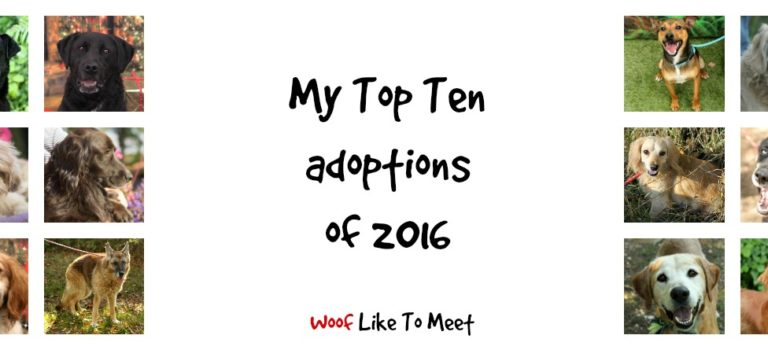 My Top Ten adoptions of 2016