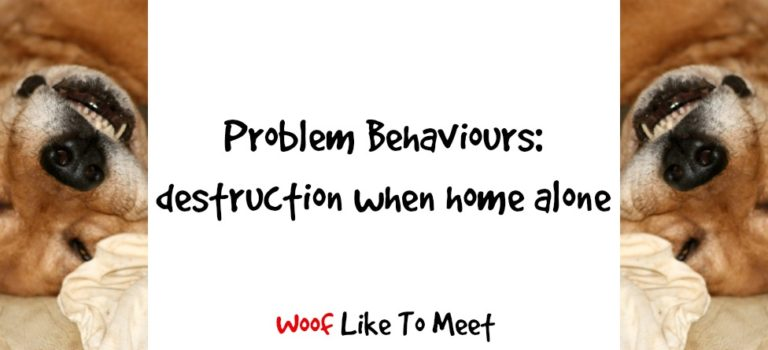 Problem Behaviours: destruction when home alone