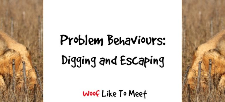 Problem Behaviours: Digging and Escaping