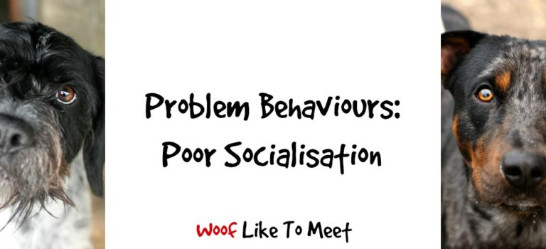 Problem Behaviours: Poor Socialisation