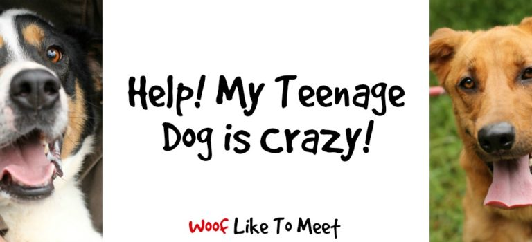 Help! My teenage dog is crazy!