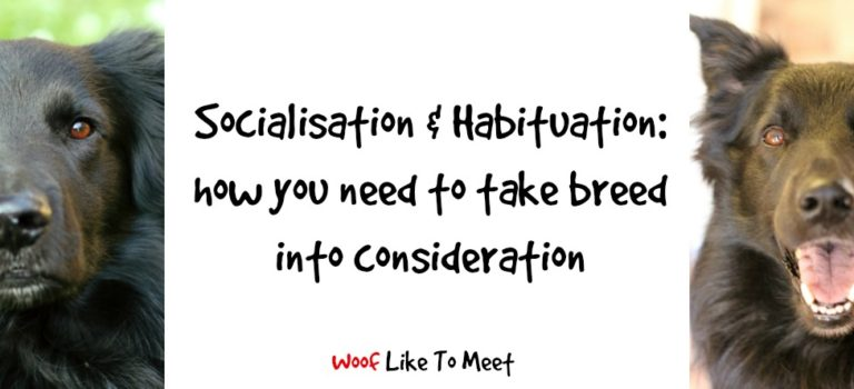 Socialisation & Habituation: how you need to take breed into consideration