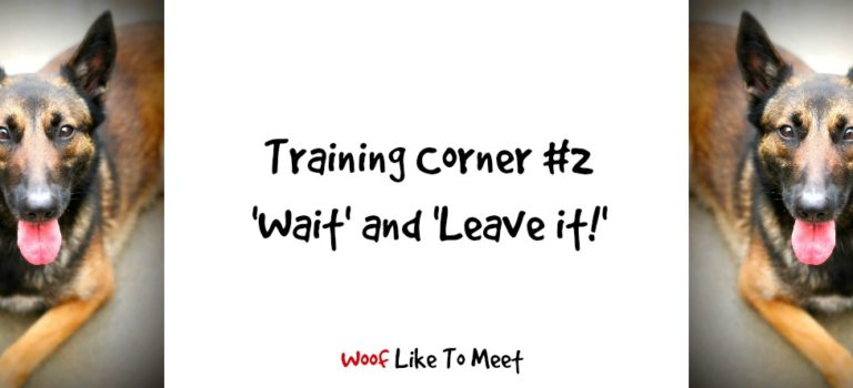 Training Corner #2: Wait and Leave it