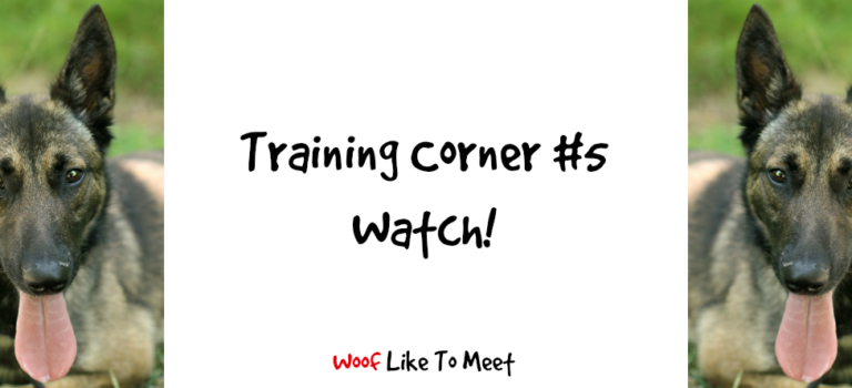 Training Corner #5 Watch!