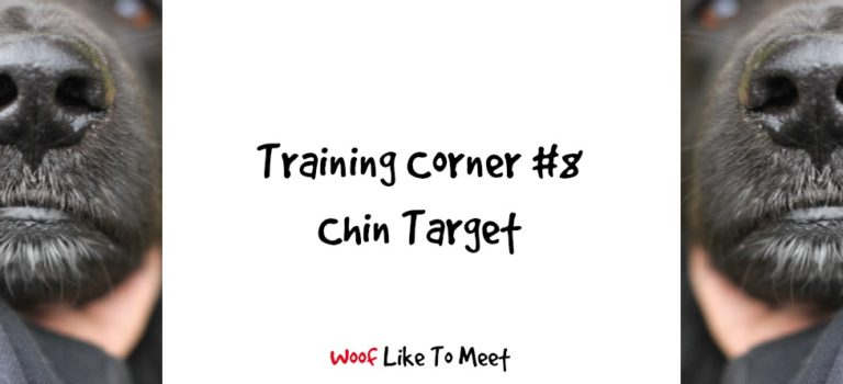 Training Corner #8 Chin Touch