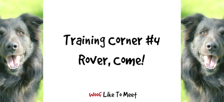 Training Corner #4 Rover, come!
