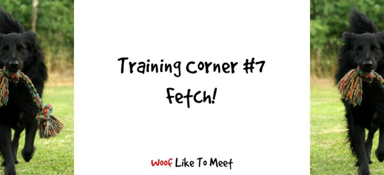 Training Corner #7 Fetch!