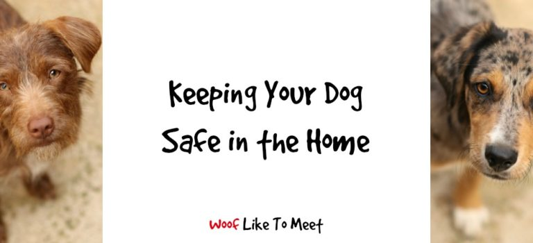 Keeping your dog safe in the home
