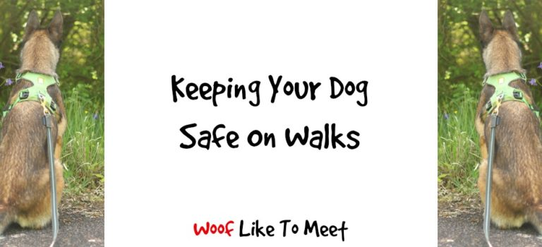 Keeping your dog safe on walks
