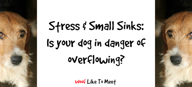 Stress and small sinks: is your dog in danger of overflowing?
