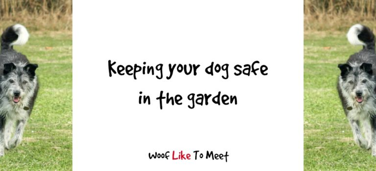 Keeping your dog safe in the garden