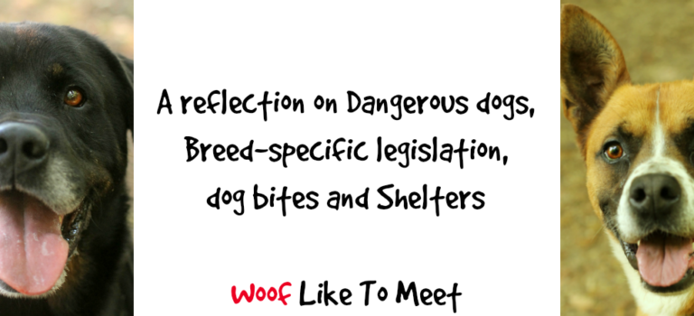 A reflection on dangerous dogs, breed-specific legislation, dog bites and shelters