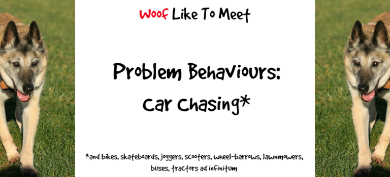 Dog problems: car chasing